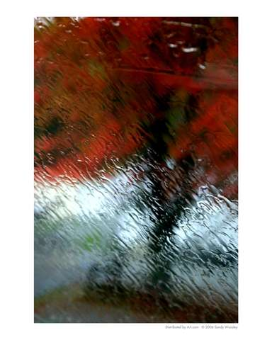 fall-colors-through-the-rain-by-sandy-woosley.jpeg